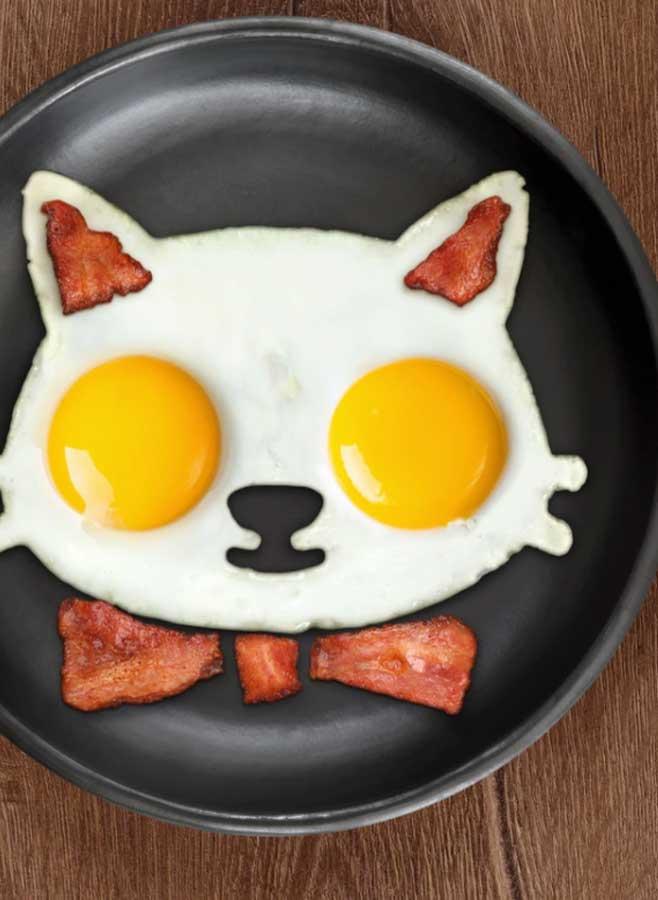 Äggform katt